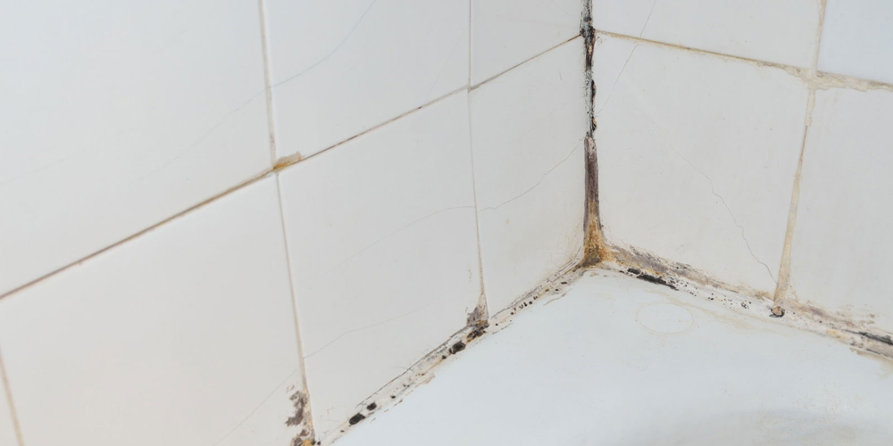 Mold growing in bathroom grout