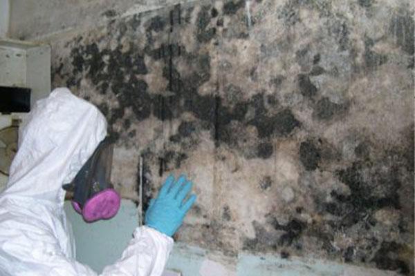 Mildew Removal technician removing mildew